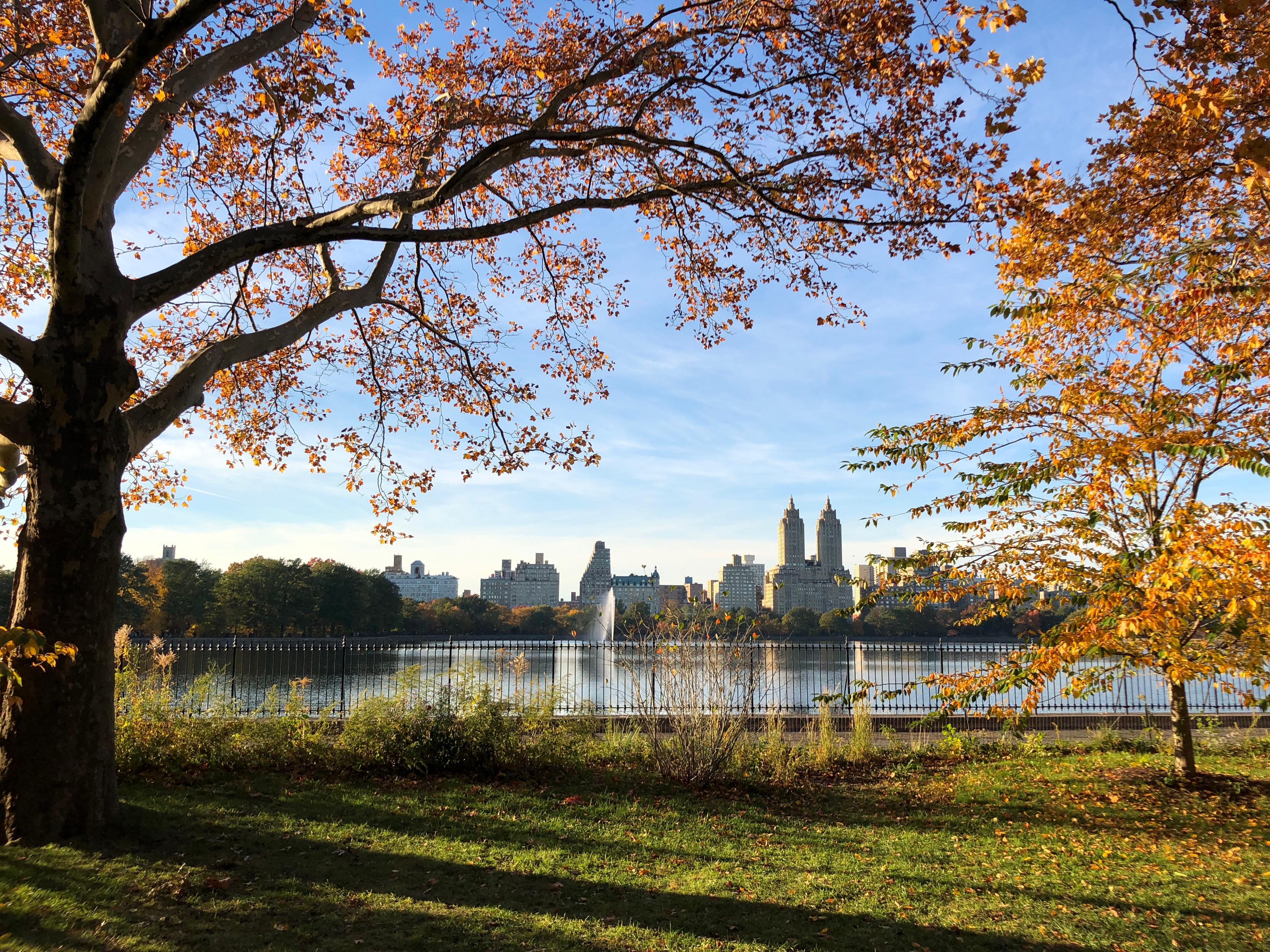 Central Park post race